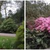 CORNWALL» le jardin de Trengwainton » a Penzance