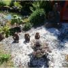 Le jardin » Arc-en-ciel » de mon amie Nelly
