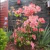 Mon jardin au fil du temps
