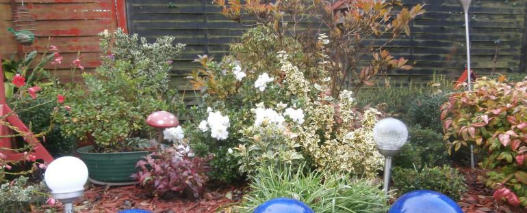 Mon jardin..janvier 2021..