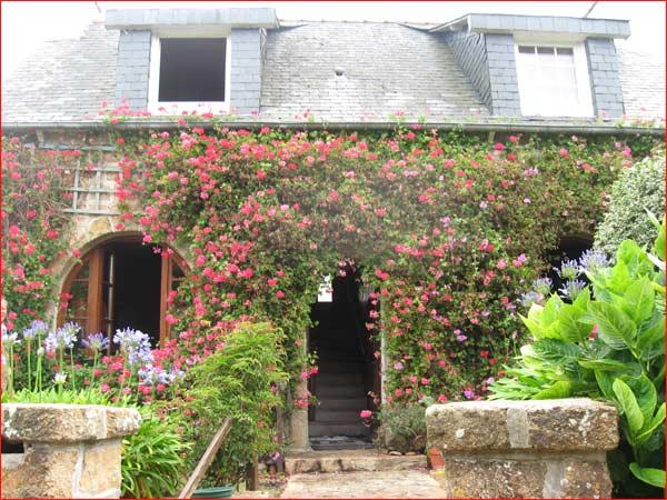 maison couvertes de géraniums