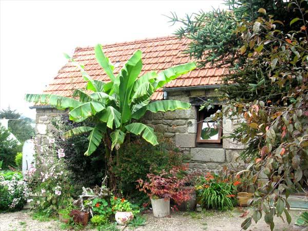 massif palmier bananier - Ecosia