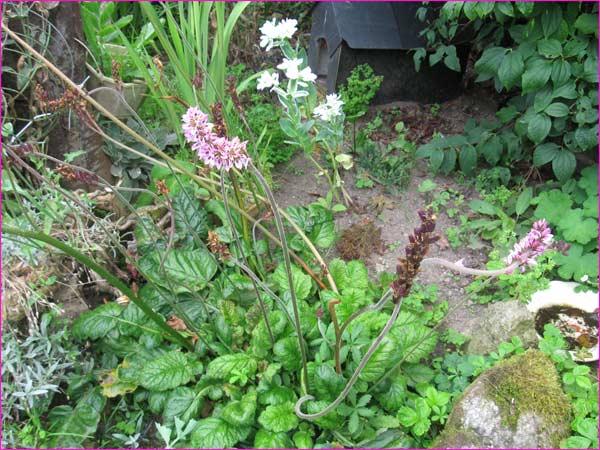 plante rare