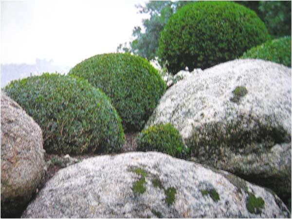 buis et gros rochers