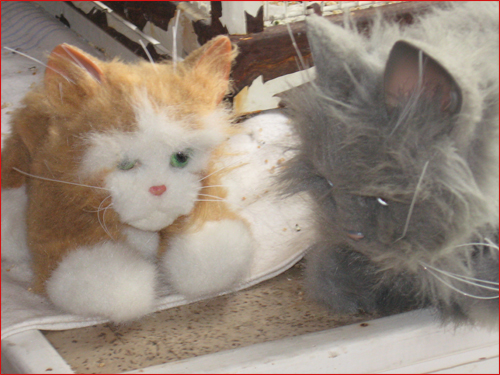 les-chats-peluches