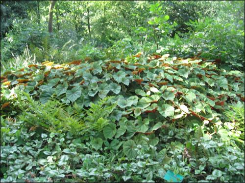 plantes-