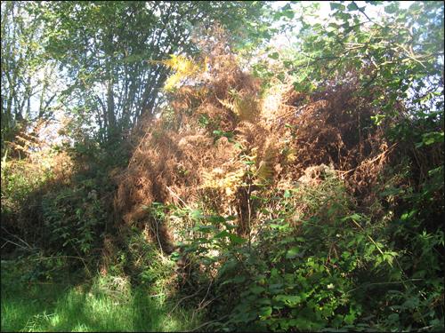fougeres-en-automne