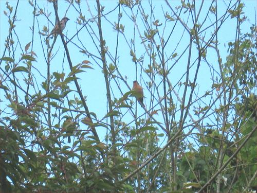 les-oiseaux-du-jardin