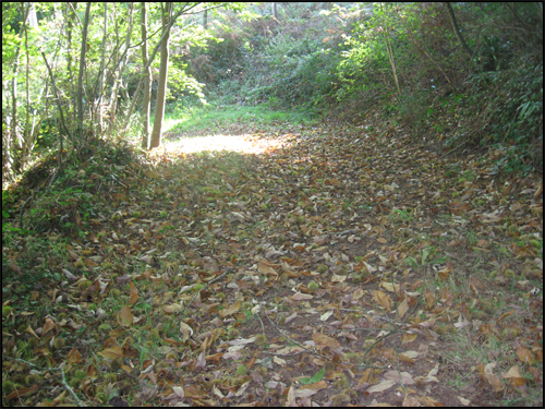 sentier-jonche-de-feuilles