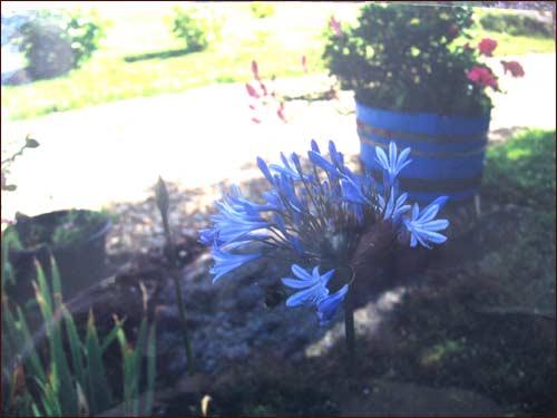 decor-bleu