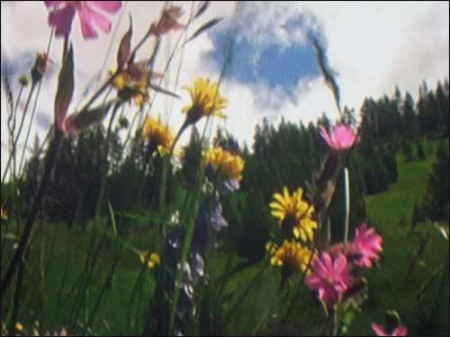 fleurs-des-montagnes