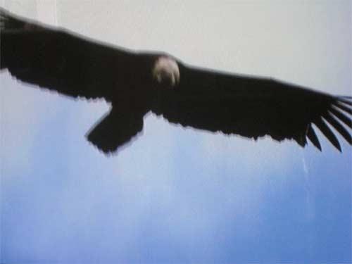 vol-de-l'aigle