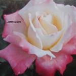 rose-laetitia-casta