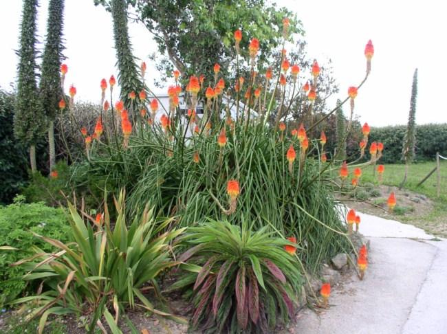 Le jardin exotique de roscoff for Jardin de plante