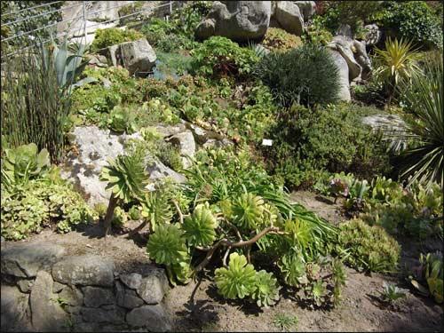 rocher-et-plantes-grasses