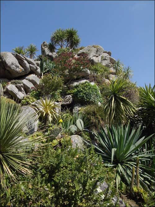 rochers-plantes