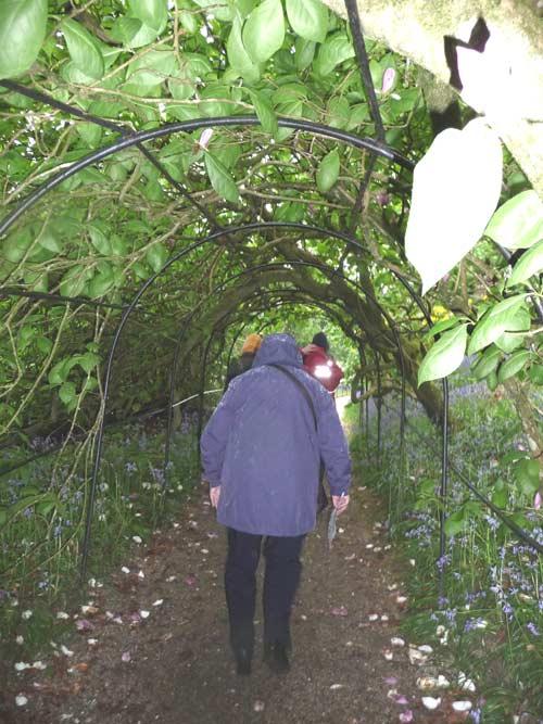 allee-de-magnolias