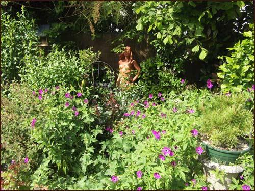 geranium-psilostemon-