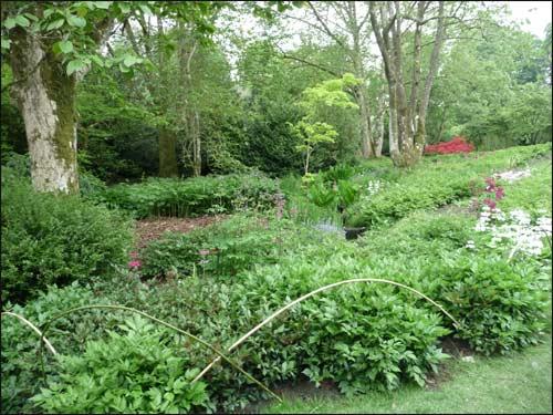 plantes-bulbeuses