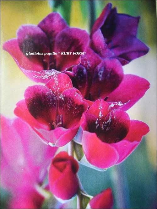 "glaieul""ruby-form"""