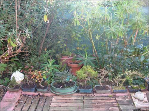 _-mes-bonsais-en-hiver