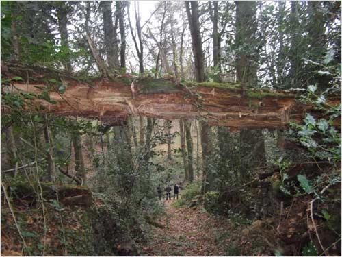 arbre-couche