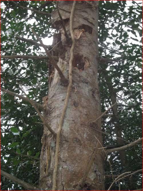 arbre-habite