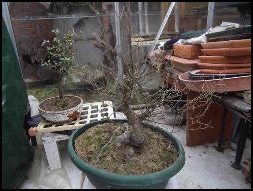 arbre-de-plus-de-30-ans