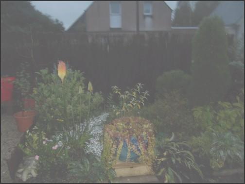 jardin-cote-cour