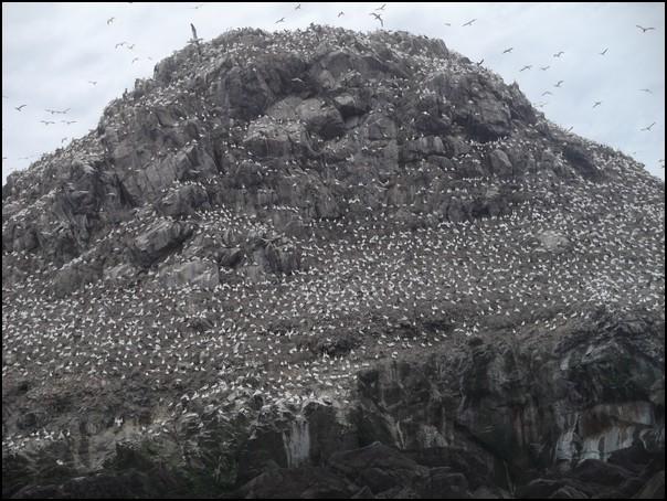 L'ile aux-oiseaux-