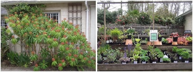Petite boutique de vente de plants a l'entrée