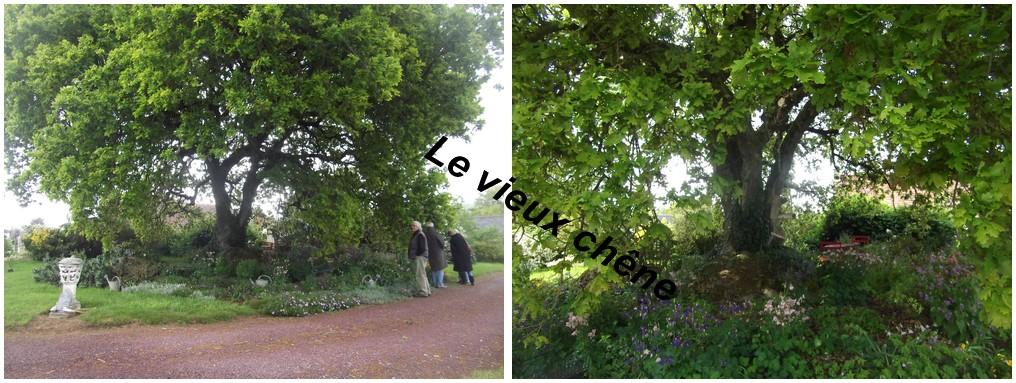 Le chêne centenaire , un décor à lui seul .
