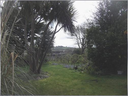 Photo du faisan se promenant dans le jardin