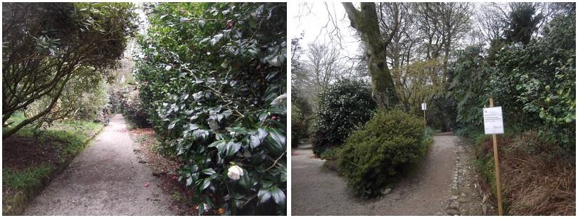 belle promenade parmi les arbres , rhodos et fougères arborescentes ..