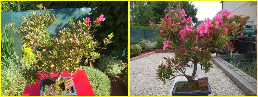 Mon bonsaï en fleurs -