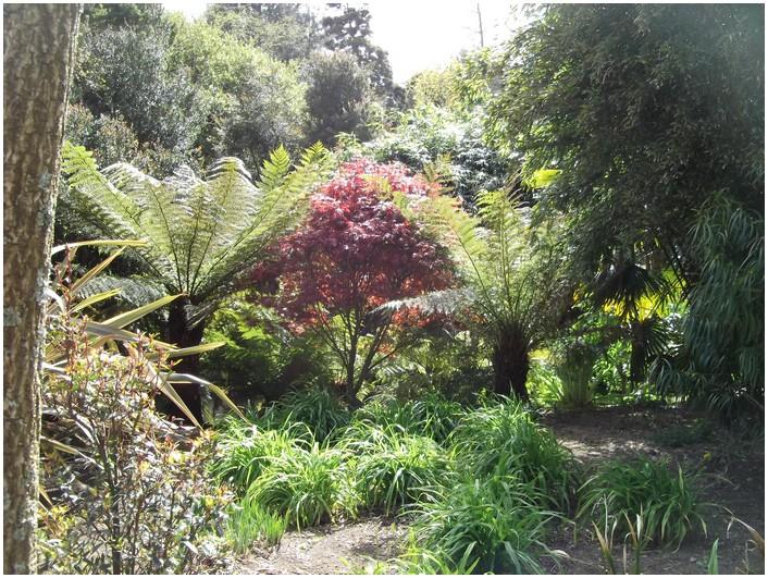 fougères et plantes -