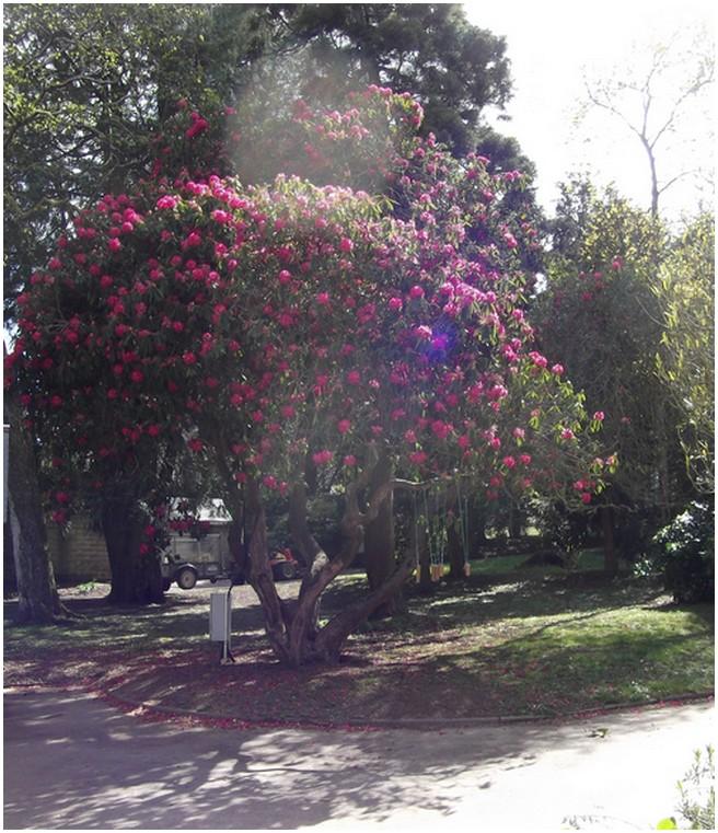 Parc de Kimberley -