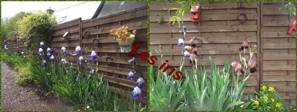 Les iris devant la maison