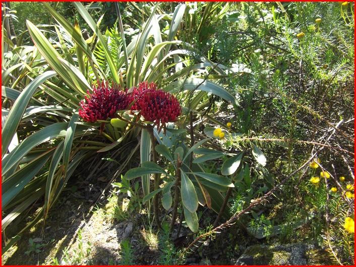 Plante Exotisme