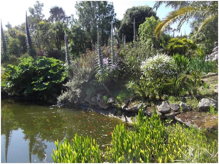 Grand  bassin avec tortues