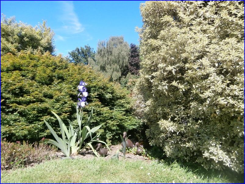 Bel iris panache
