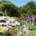 profusion de fleurs et couleurs
