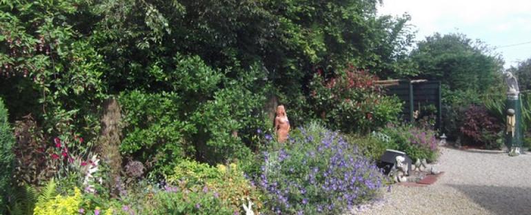 Mon jardin en Janvier