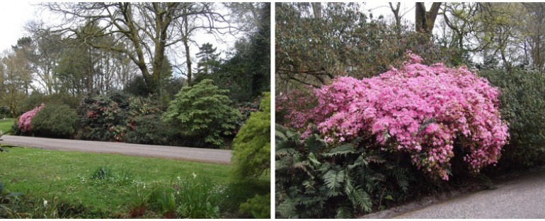 CORNWALL » le jardin de Trengwainton  » a Penzance