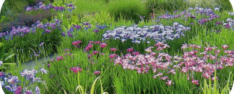 Le jardin du Pellinec  en Bretagne