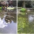 Joli bassin avec sa famille de canards